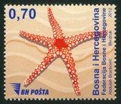 Morska Fauna – Zvijezda
