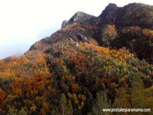 Bosques Aragón Otoño - Postales para Mamá