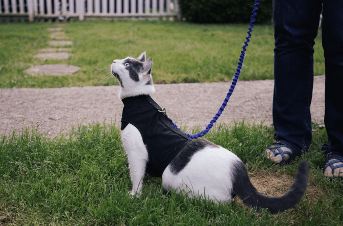 safety, cat harness