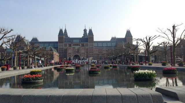 The tulips in front of the Rijksmuseum in Amsterdam.