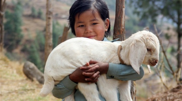 Young Girl with Goat, Nepal