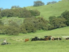 Cattle grazing lands