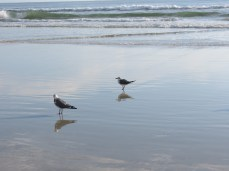 Seabirds enjoying the waves