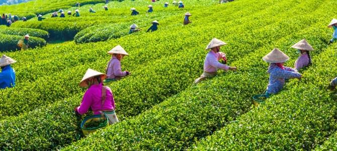 Vietnam's Moc Chau Plateau