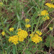 Escondido hiking and wildflowers
