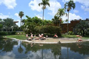 Miami zoo with flamingos