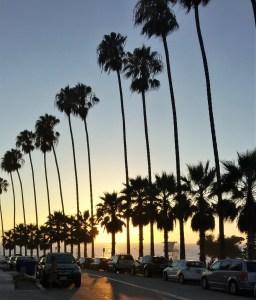 palm trees of La Jolla