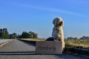 travelling dog