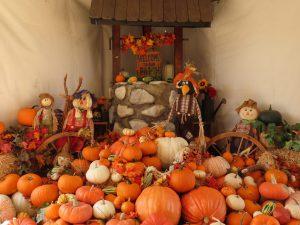 pumpkin patch in San Diego