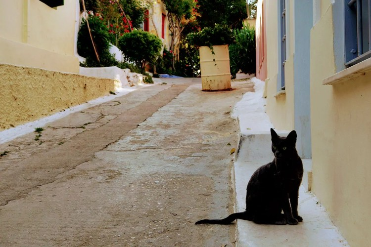 Athenian cat