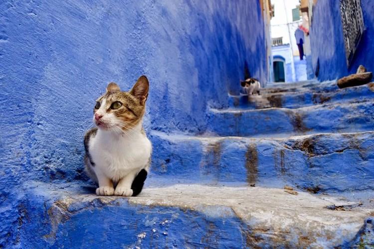 Chefchaouen cats