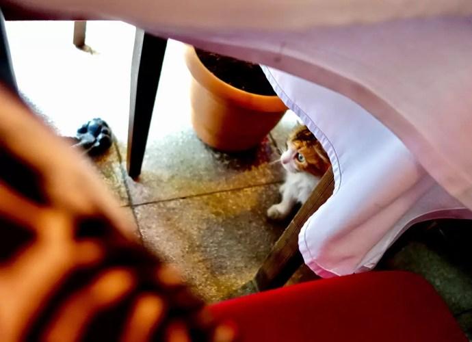 Greek cat under table