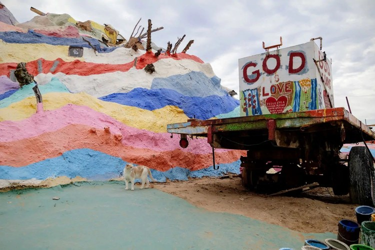 Cats of Salvation Mountain