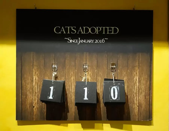 Cats adopted at Seattle Meowtropolitan