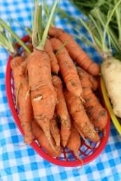 Farmer's-Mkt-West-Carrots
