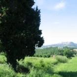Umbria green hills fields tree