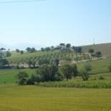 Umbria green vineyards
