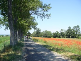 Umbria road trees fields