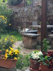 Civita-di-Bagnoregio - cats