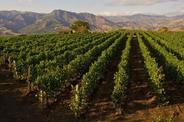 Cottanera Vineyards (Photo: SImona Ferro)