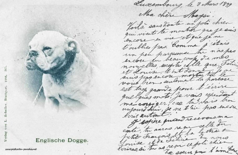 alte Postkarte Hund Dogge