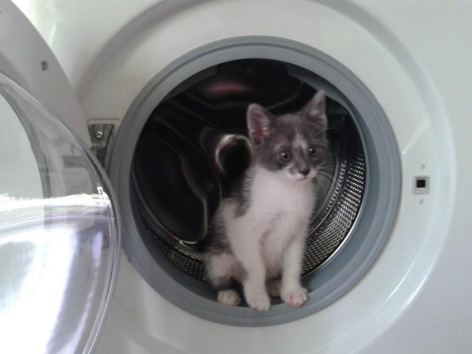 Η Βιολέτα απέκτησε νέο γατάκι – Πως να το βαφτίσει   b0ca39f5bc3