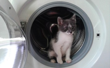 Επίθεση στο… πλυντήριο !