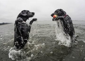 Η απαράμιλλη χαρά των σκύλων στις παραλίες