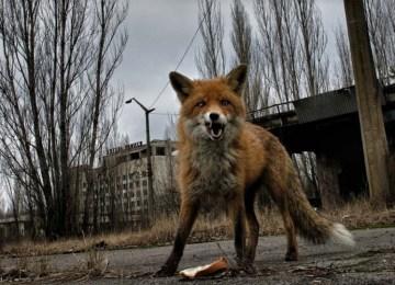 Τσερνομπίλ: Η κρυμμένη «κληρονομιά» του πυρηνικού ατυχήματος από τον Pierpaolo Mittica