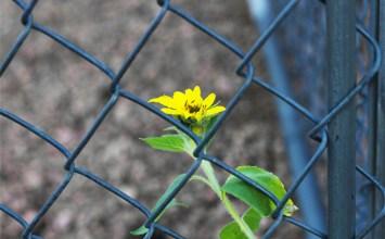 Τα σχολεία των φυλακών – Συνέντευξη με τον Νίκο Αρμένη