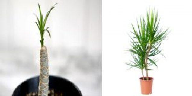نباتات المكاتب