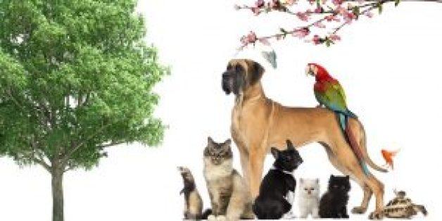 الحيوانات الأليفة