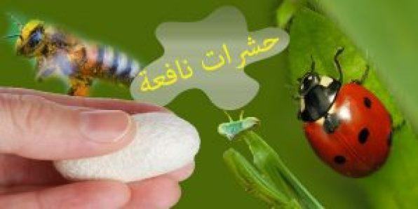 حشرات نافعة
