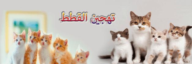 تهجين القطط