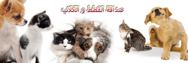 الكلاب و القطط