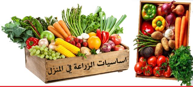 اساسيات الزراعة في المنزل