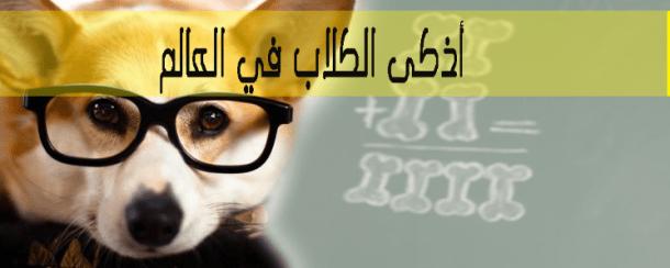 أذكى الكلاب في العالم