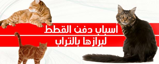 أسباب دفن القطط لبرازها بالتراب