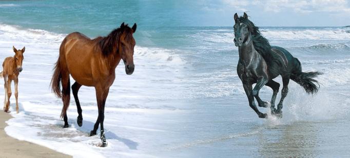 أنواع الخيول في العالم