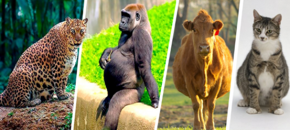 مدة حمل الحيوانات