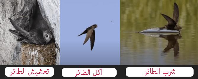 طائر يأكل ويشرب ويأكل ويتزاوج بالجو