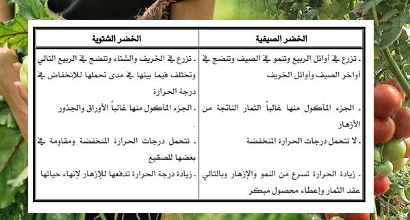 مواعيد الزراعة في السعودية
