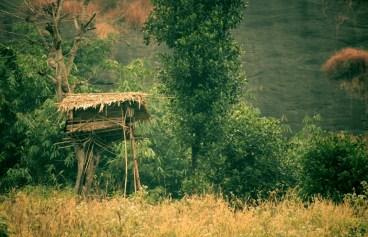 Tribal Architecture_Kerala (2)
