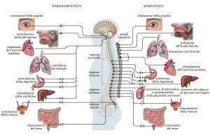 sistema neurovegetativo