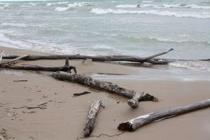 Nature's Driftwood arrangements