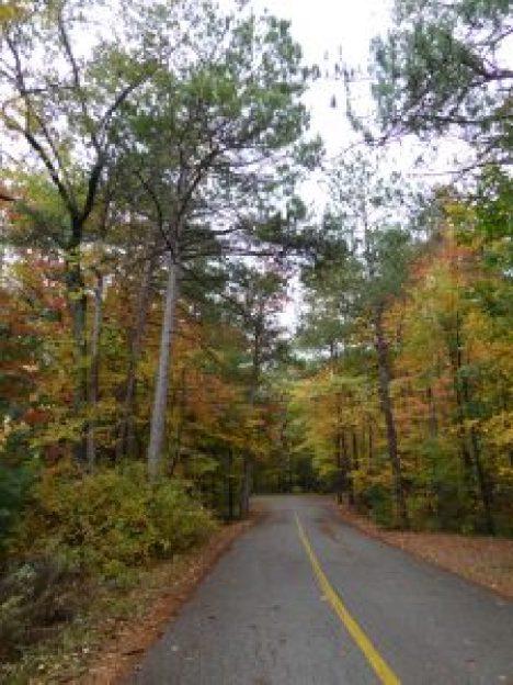 Curiosity -- autumn Leaves