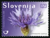 korenbloem_slovenie_centaurea-cyanus_2009_postzegel