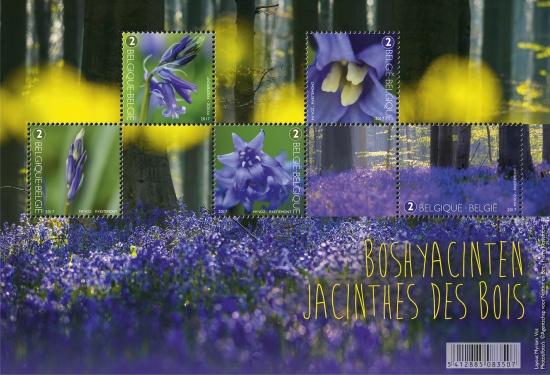 Bloeiend Bos De hyacinten van het Hallerbos