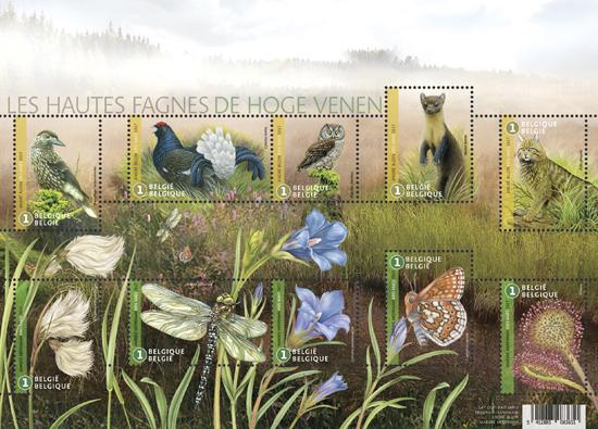 Op de Hoge Venen 60 jaar uniek natuurreservaat