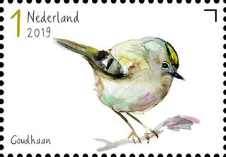 Tuinvogels in Nederland - Goudhaan